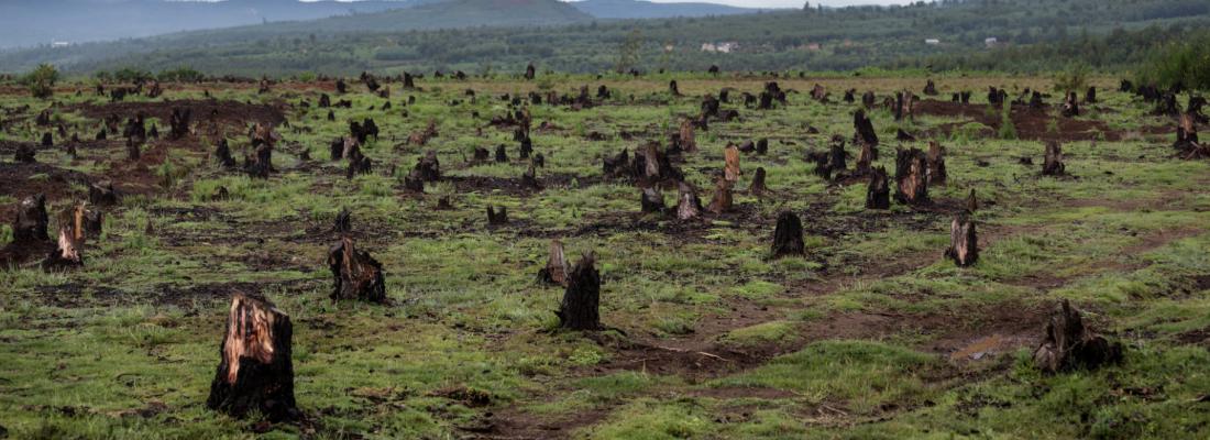 11ème Tribune de Muzito «RDC : Emergence à l'horizon 2030, illusion ou propagande?»