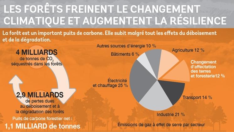 Les forêts sont une ressource vitale pour le climat, l'eau, la santé et les moyens de subsistance