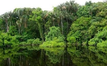 RDC : Protection des forêts, la Norvège octroie 200 millions USD au projet REDD+