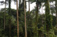 RDC : Levée « conditionnée » du moratoire sur l'octroi des titres d'exploitation forestière !