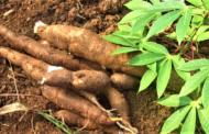 RDC : 500 millions USD d'Afrexim Bank pour relancer l'agriculture !