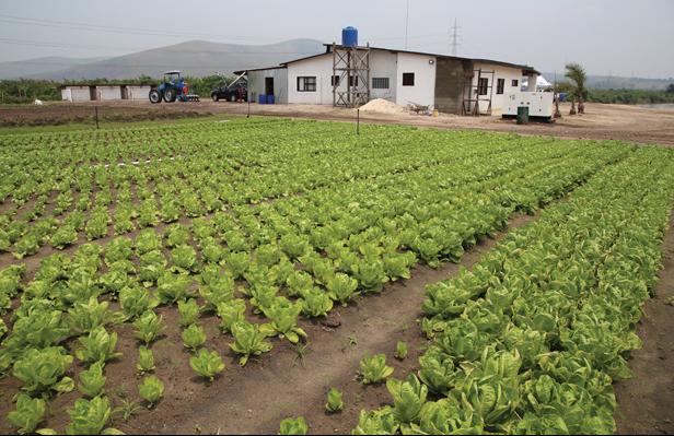 RDC : 1 564 fermes actives identifiées par le ministère de l'Agriculture