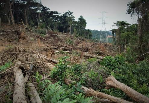 Forêt Rdc