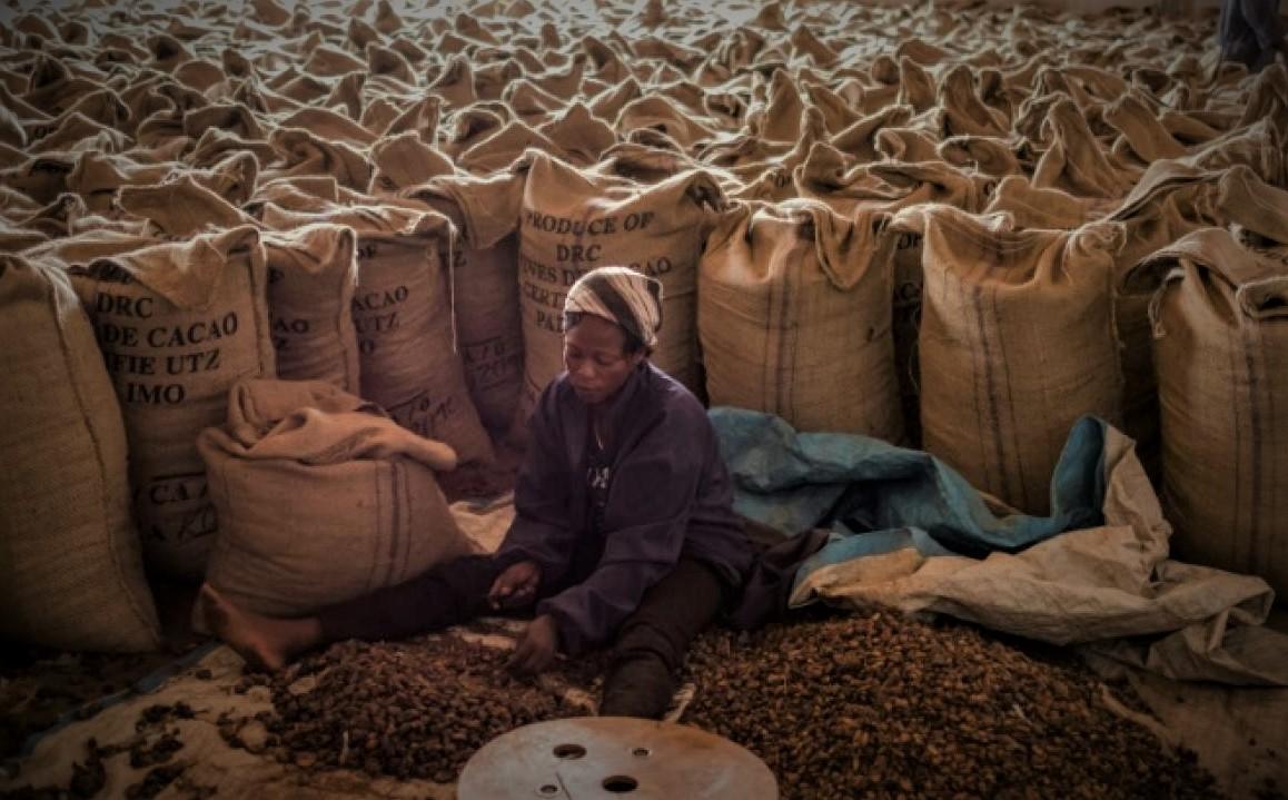 RDC : Environs 1 300 T de Cacao et Café perdues à cause de la fraude