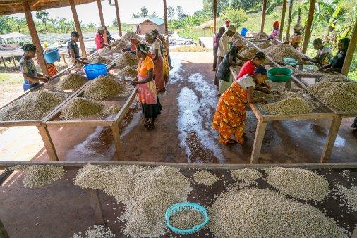 RDC : «Saveur du Kivu» célèbre la diversité de cafés dès ce mardi à Bukavu