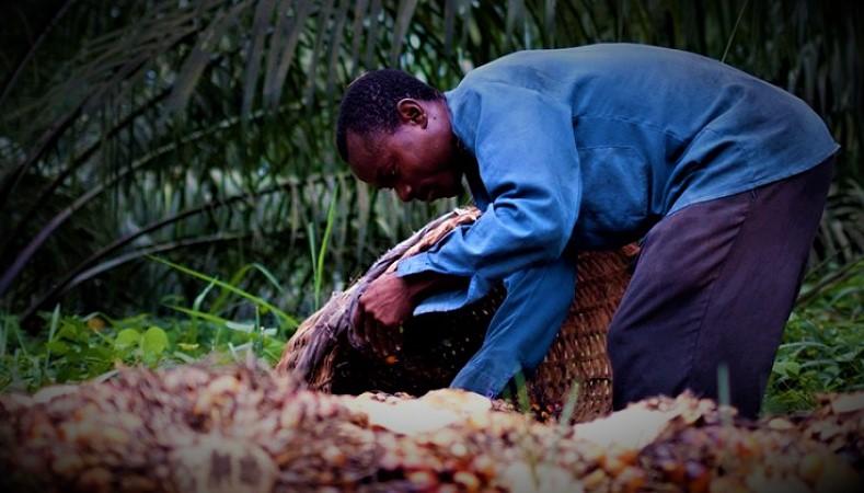 RDC : La firme Feronia engagée dans la relance la production d'huile de palme