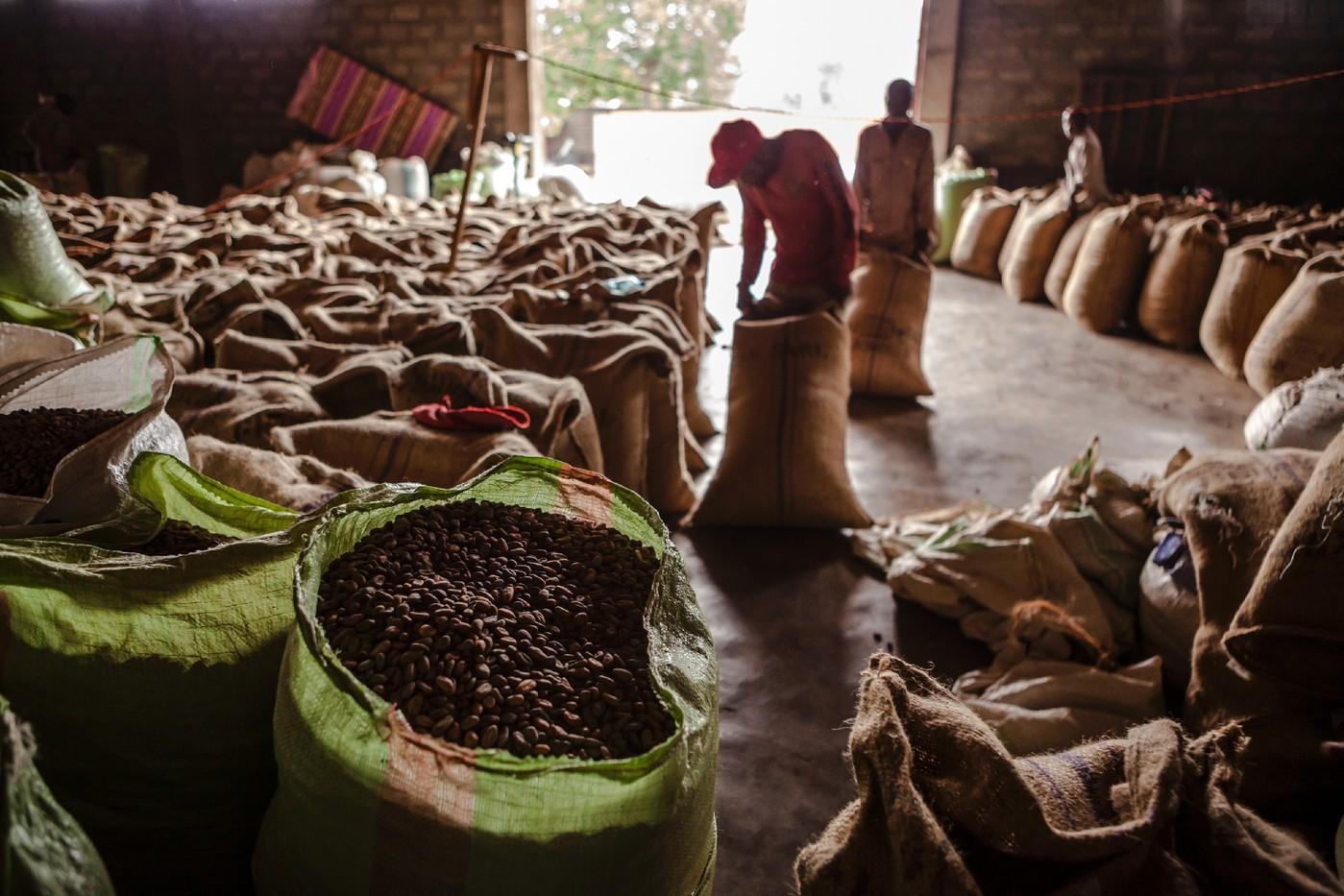 Cacao Béni