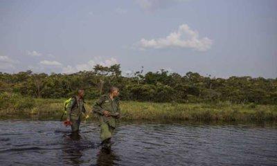 Monde : 740 écogardes sont morts dans l'exercice de leurs fonctions entre 2009 et 2017 1