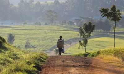Kigali: AGRF 2018, un forum pour la promotion de l'agriculture en Afrique 7