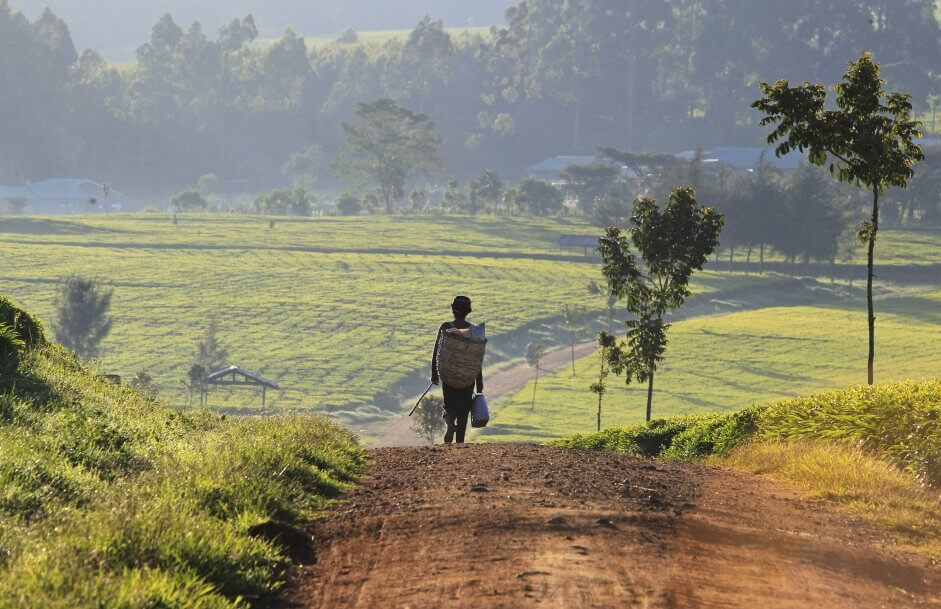 Kigali: AGRF 2018, un forum pour la promotion de l'agriculture en Afrique 1