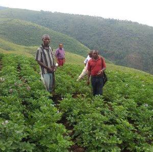 Félicien Zozo : «YULIMA oeuvre pour l'entrepreneuriat agricole des jeunes» 2