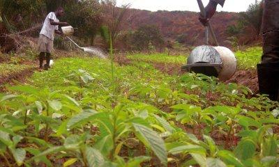 RDC: PARRSA, le budget additionnel de 40 millions USD adopté pour l'Equateur 3