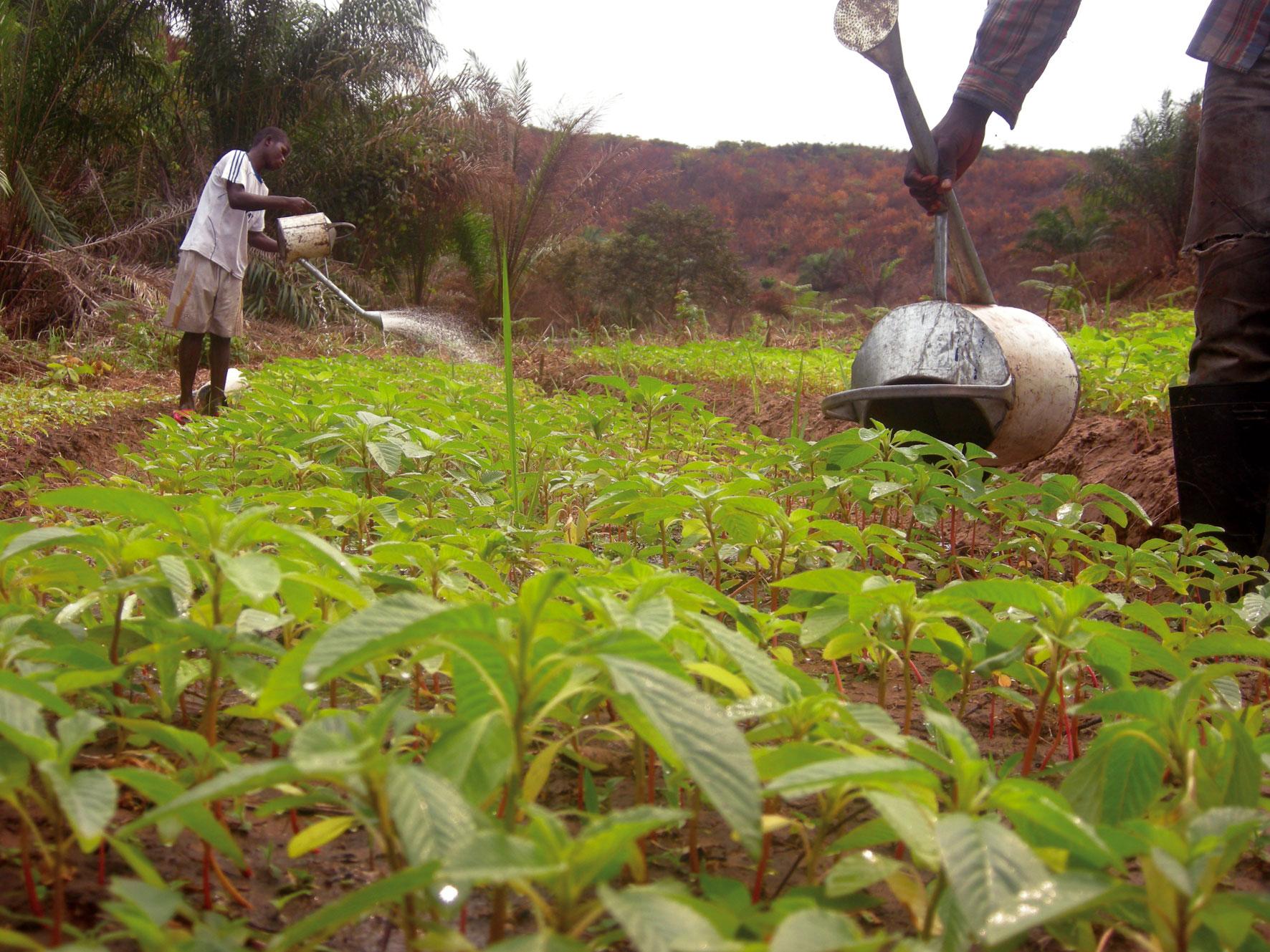 RDC: PARRSA, le budget additionnel de 40 millions USD adopté pour l'Equateur 1