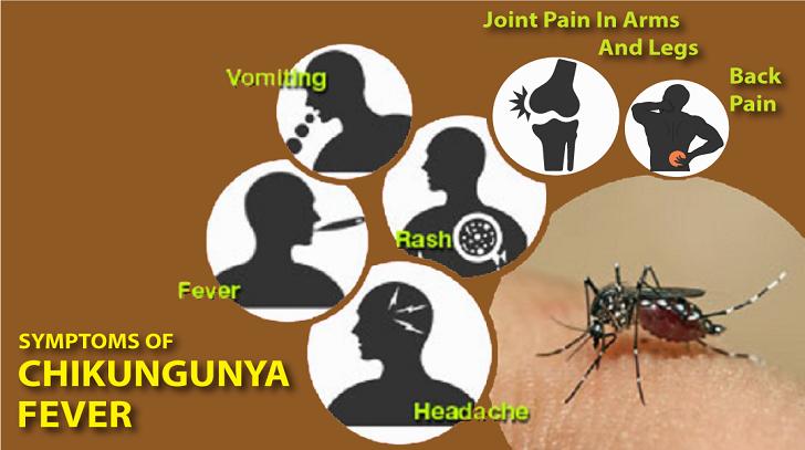 RDC : alerte sur l'épidémie de Chikungunya à Kinshasa ! 1