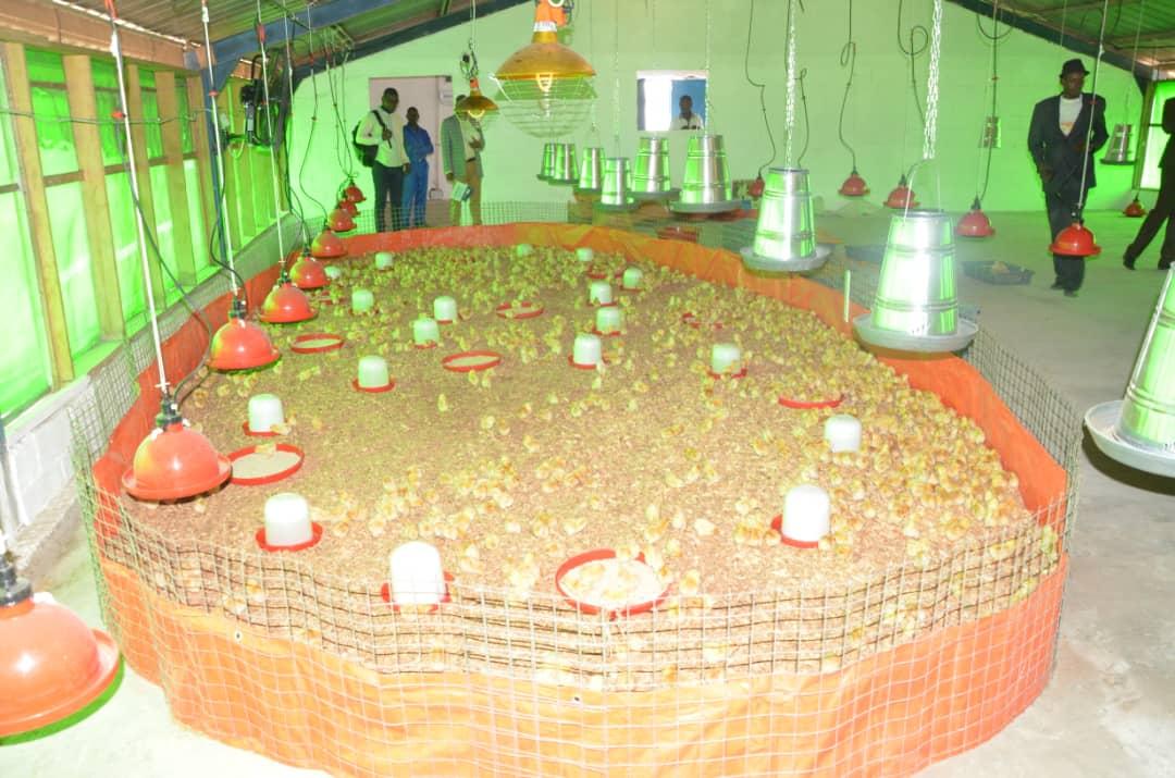 RDC: la ferme de DAIPN Lukelenge dotée d'un 1er lot de 5 000 poussins par le FPI 1