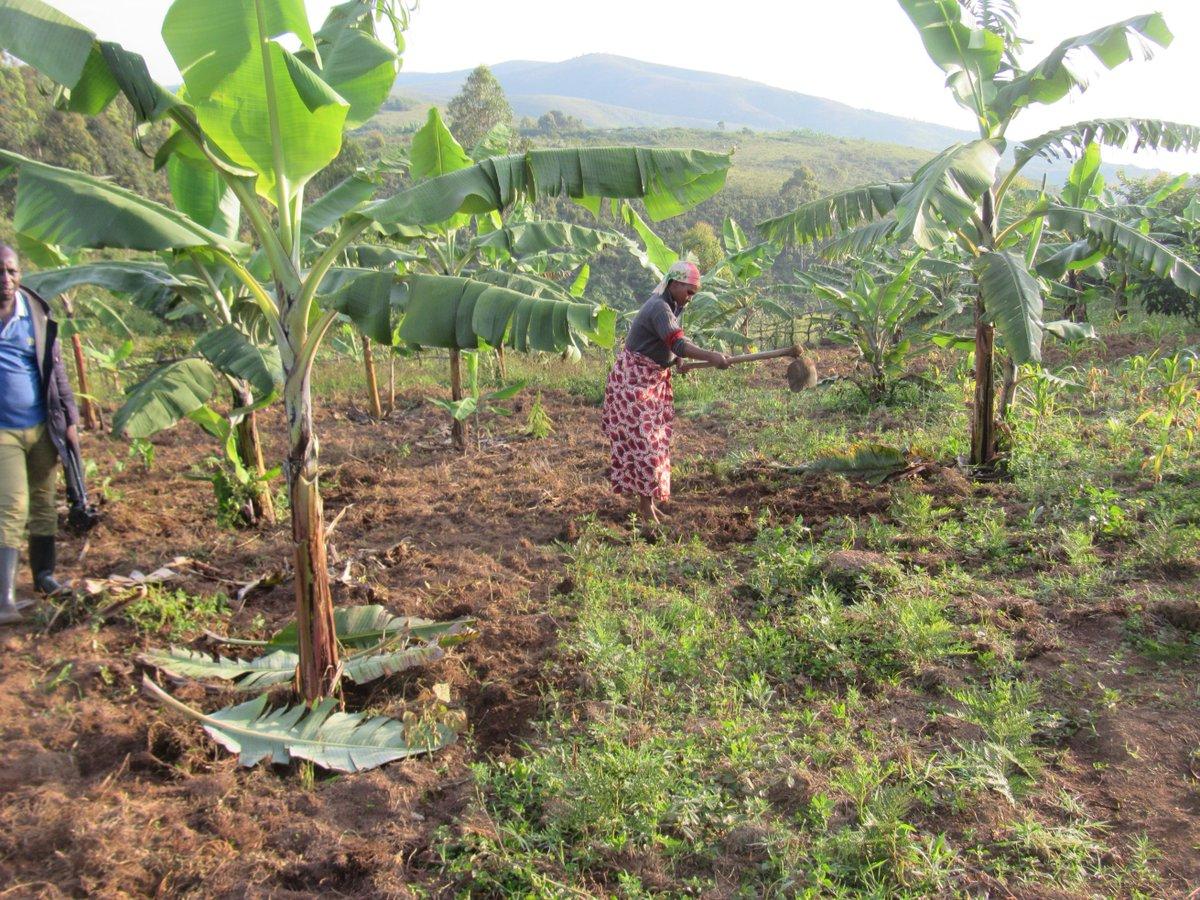 Afrique : agriculture, la RDC non éligible à l'allocation de 176 millions USD du FEM aux neuf pays 1