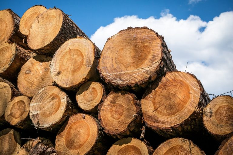 Monde : la CEMAC interdit d'exporter le bois sous forme de grumes par le Bassin du Congo dès le 1er janvier 2022 !