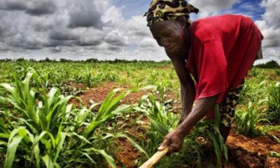 RDC : le Gouvernement appelé à mettre en œuvre la relance du secteur agricole assorti d'un plan d'investissement !