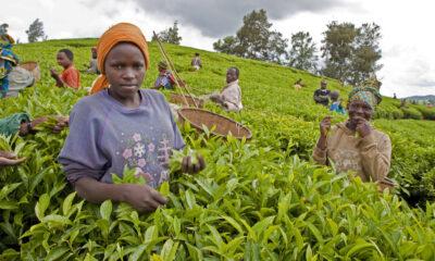 Afrique : des dirigeants du monde appelés à accroître leurs investissements au FIDA pour combattre la faim et la pauvreté en milieu rural 77