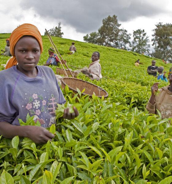 Afrique : des dirigeants du monde appelés à accroître leurs investissements au FIDA pour combattre la faim et la pauvreté en milieu rural 74