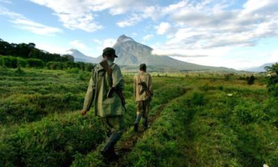 RDC : WWF invite l'ICCN à instaurer un meilleur contrôle de tous les écogardes 102