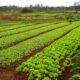 RDC : la MAE projette un sit-in devant le ministère de l'Agriculture pour exiger l'octroi des tracteurs en faveur des jeunes ! 106