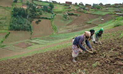 RDC : malgré le sit-in, pas de compromis entre la MAE et le ministre de l'Agriculture 48