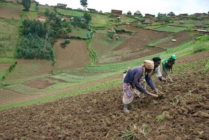 RDC : malgré le sit-in, pas de compromis entre la MAE et le ministre de l'Agriculture 1